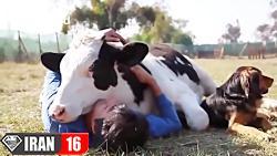 عشق و رفاقت بین انسان و حیوانات