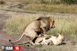 hot-photos-of-mating-animals