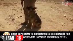 بهترین نژادهای سگ پلیس