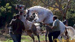 جفت گیری انسان با اسب