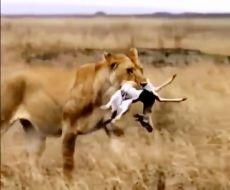 مبارزه برای زنده ماندن طبیعت وحشی - حیوانات حیات وحش