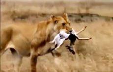مبارزه برای زنده ماندن طبیعت وحشی – حیوانات حیات وحش
