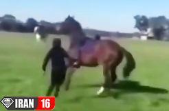 هیچ موقع یه اسب رو اذیت نکنید (خخخخ)