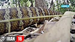 رازهای حیات وحش استرالیا با دوبله فارسی