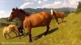 حیات وحش ,حيوانات ,کلیپ های حیوانات ,حیوانات وحشی ,حمله حیوانات ,جنگ و نبرد حیوانات
