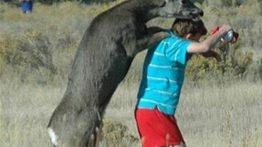 جفت گيري حيوانات با انسان