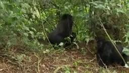 راز بقا ,حیات وحش ,دنیای حیوانات ,مبارزه حیوانات