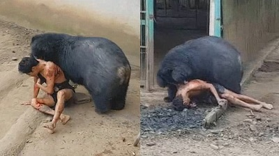 زنده زنده خوردن آدم توسط خرس سیاه در باغ وحشی در تایلند / فیلم دلخراش 18+