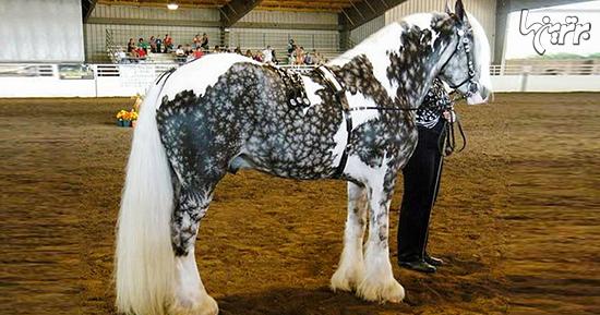 زیبا ترین اسب های برروی زمین