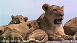 مستند حیات وحش آفریقا قسمت 1