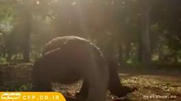 مستند حیات وحش (اژدهای کومودو)