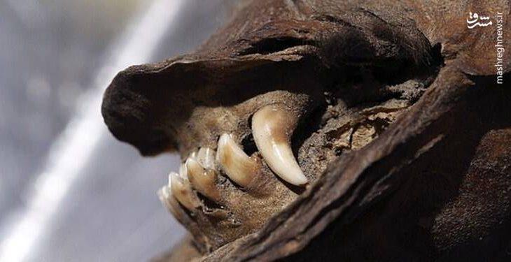 کشف جسد ۱۸ هزار ساله یک سگ +عکس (3)