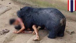 کلیپ درگیری حیوانات با انسان