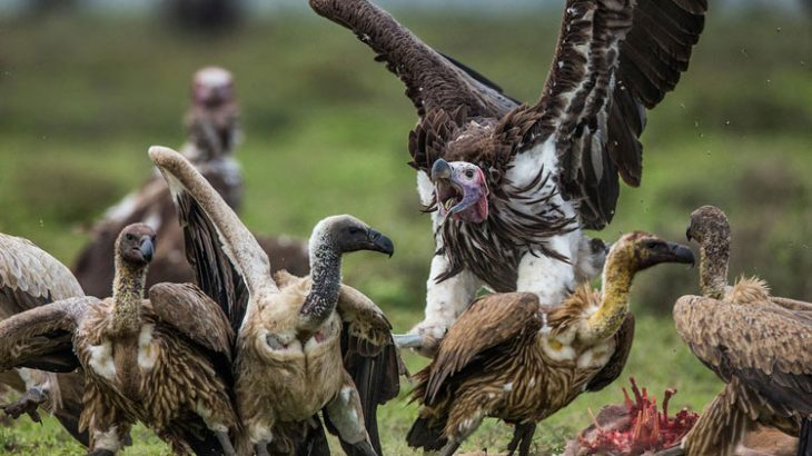 vultures-competitive-flyinto-group