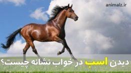 تعبیر-خواب-اسب
