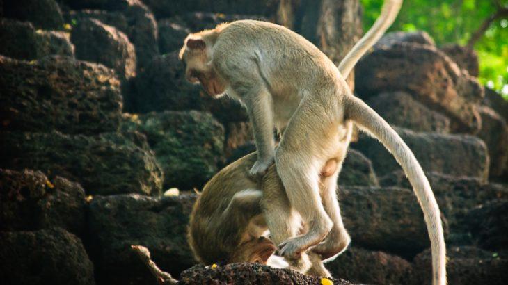 Monkeys doing the thing monkeys do