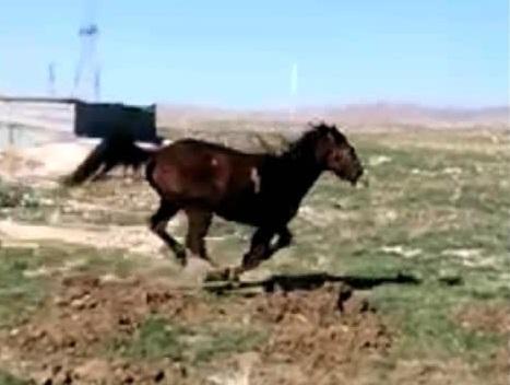 فرار اسب به علت جفت
