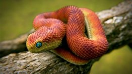 10 RAREST Snakes In The World (2)