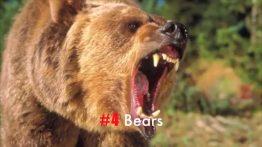 11 صدای وحشتناک حیوانات وحشی (3)