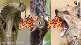 14 صحنه دیدنی از مبارزه حیوانات با یکدیگر