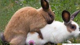 جفت گیری حیوانات animals mating