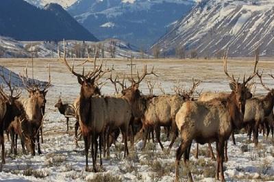 حیات وحش کانادا