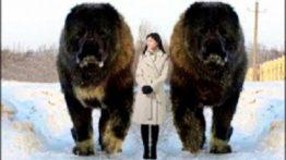 10 Great Abnormal Dogs Worldwide!