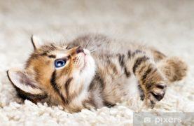 Funny kitten in carpet
