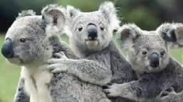 Funny pets for Australia
