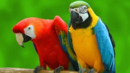The most beautiful parrots in the world
