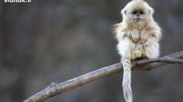 There are 10 unique animals you can't believe (3)