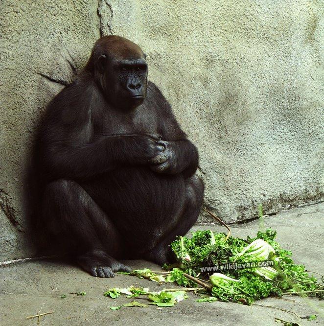 حیوانات حامله pregnant animals