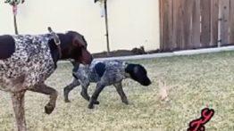 حرکت خفن سگ