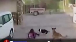 Mother trying to save her baby from stray dogs + 18
