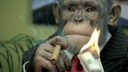 Strange monkey job