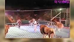 فیلم صحنه دلخراش حمله وحشتناک حیوانات به انسان 18+ انسان