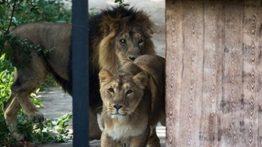 حمله حیوانات باغ وحش به مردم (بدون آسیب)
