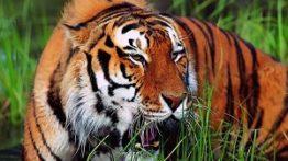 حیوانات وحشی تاحد می جنگند – حمله حیوانات به حیوانات وحشی+18