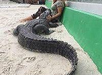 دوستی باورنکردنی! انسان و حیوانات وحشی