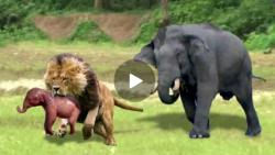 مراقبت فیل از نوزادش در برابر شیر