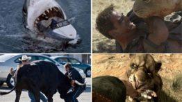 کلیپ خفن از حمله حیوانات وحشی و درنده به انسان