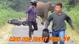 The confrontation between humans and wild and large animals
