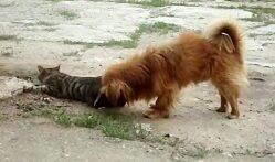 جفتگیری باورنکردنی سگ و گربه