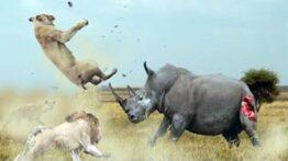 جنگ-و-شکار-حیوانات