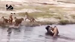 حملات حیوانات وحشی به انسان ها