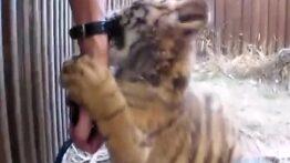 حمله و شکار حیوانات وحشی و درنده وحشتناک +18