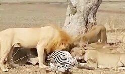 شکار-حیوانات-جنگ-حیوانات وحشی