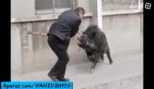 وحشتناک ترین حمله حیوانات به انسان ها و خوردن زنده زنده