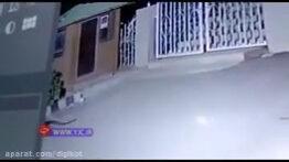 پلنگ , حمله حیوانات ,سگ نگهبان