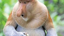 ۱۰ تا از زشت ترین جانوران جهان